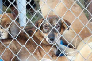 animal-breed-cage-1350563